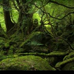 БЕДУИН-По лесу