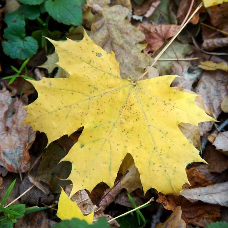 Берегиня-Осенняя песня