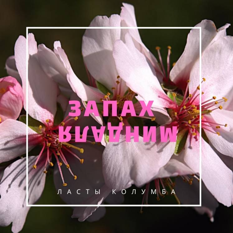 Ласты Колумба-Запах миндаля