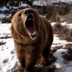 Медведь  Dj Vini remix-Любимая моя
