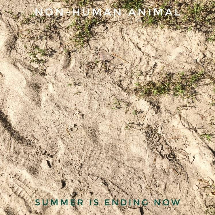Non-Human Animal-Summer is ending now