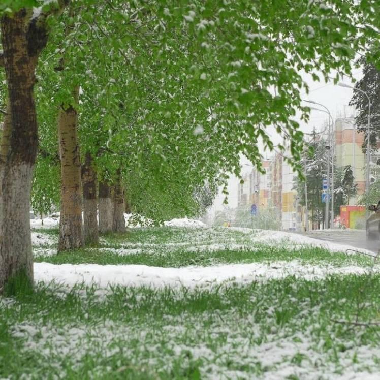 Rozalinda-Снежный сон
