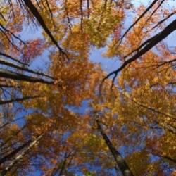 Сергей Мошков-Листья ли с дерева рушатся