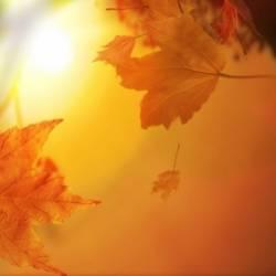 Сергей Мошков-Ты посмотри любимый радугой листопады