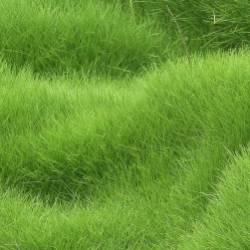 Сергей Мошков-В густой траве пропадёшь с головой
