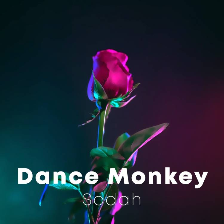 Sodah-Dance Monkey