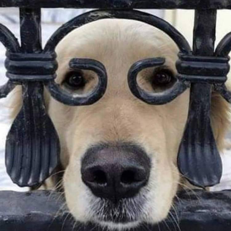 Steve Shenker-шалый пёс