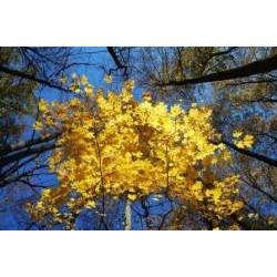 Ю.Ключарёва - Золотая осень