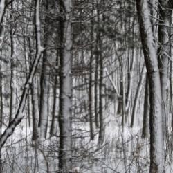 Юлия Ключарёва-Зимняя сказка